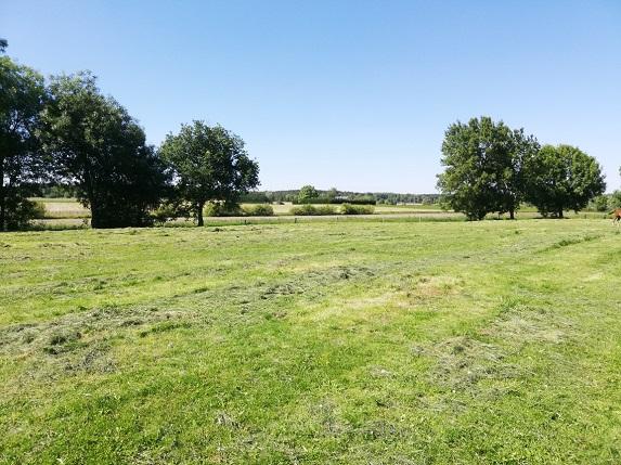 Pousse de l'herbe : la croissance stagne, l'herbe a besoin d'eau