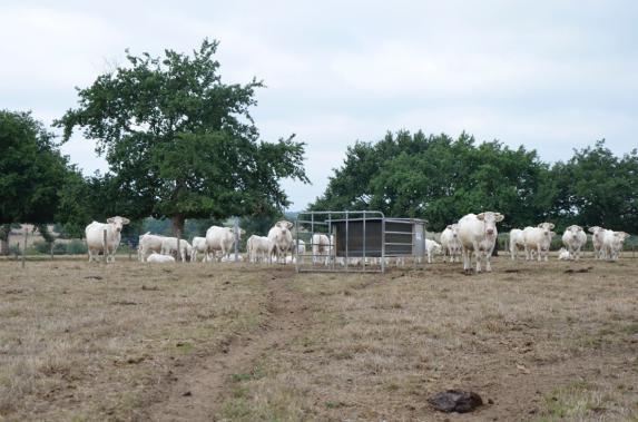 Mauges : demande de reconnaissance calamités agricoles