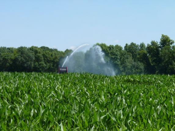 Irrigation : les restrictions se renforcent