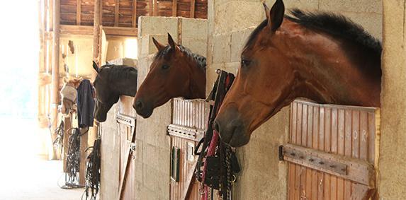 Pac : les fermes équestres enfin éligibles
